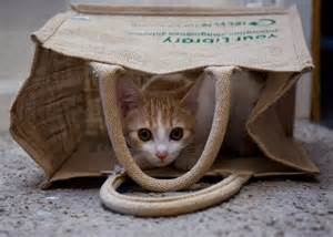 cat in the bag sci romania 187 cat in the bag 15 26th of july in lviv