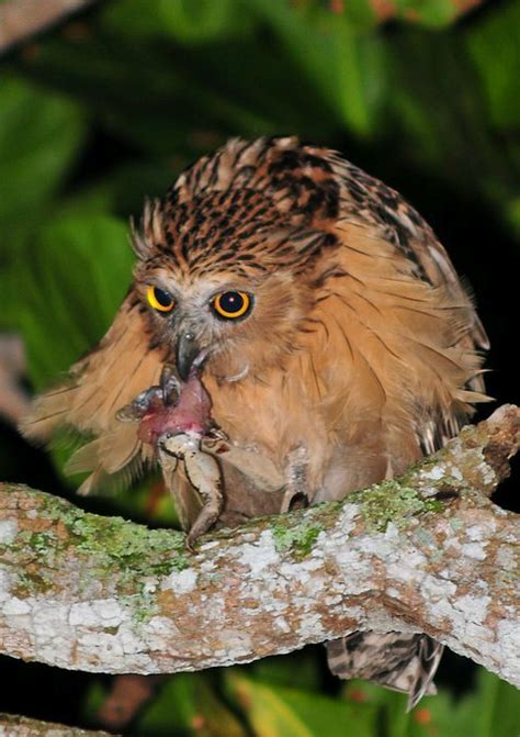owl the silent hunters of the night live life and love
