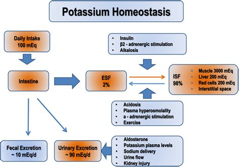 Hypokalemia A Clinical Update In Endocrine Connections