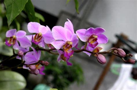 kumpulan gambar bunga anggrekblog bunga