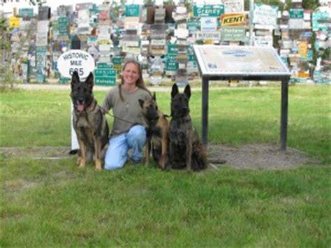 professional dog  puppy training denton lewisville