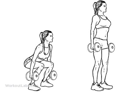 dumbbell squat illustrated exercise guide workoutlabs