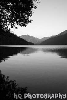 lake cresent tree silhouette sunset black  white photo