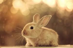 Baby bunny by aoao2 on DeviantArt