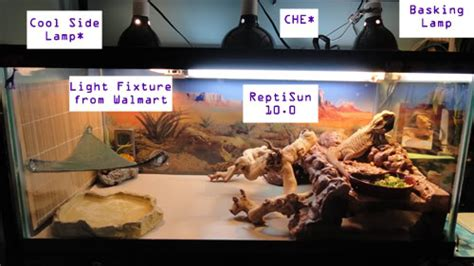 bearded dragon basking light newbies guide lighting help beardeddragon org
