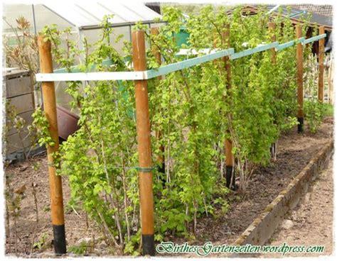 Garten Pflanzen Himbeeren by Bildergebnis F 252 R Rankhilfe Himbeeren Garten