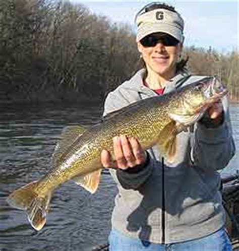 Pa Fish And Boat Commission Sweet Valley Pa by Pennsylvania S 2009 Walleye Forecast
