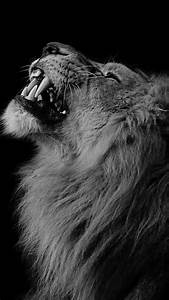 Black And White Lion Wallpaper Iphone Pictures to Pin on ...
