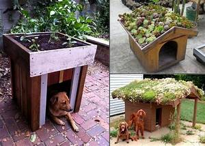 build a green roof on your dogs house home design With green dog house