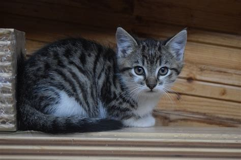 Katze Flöhe Was Tun by Die Katze Markiert Was Tun Kalaydoskop