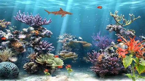 coral reef aquarium animated wallpaper httpwww
