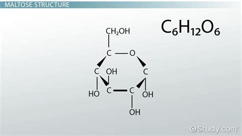 Maltose: Definition, Structure & Function - Video & Lesson ...