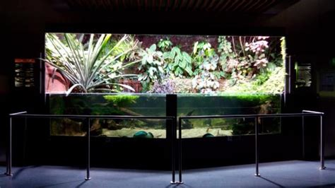 un tableau picture of museum aquarium de nancy nancy tripadvisor