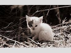 Kostenloses Foto Katze, Katzenbaby, Babykatze, Süß