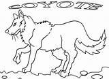 Coyote Coloring Printable Jackal Cool2bkids Getcolorings sketch template