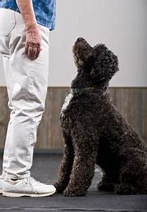 your dog is never too old for training With adult dog training