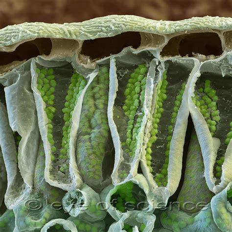 microscopy sica science