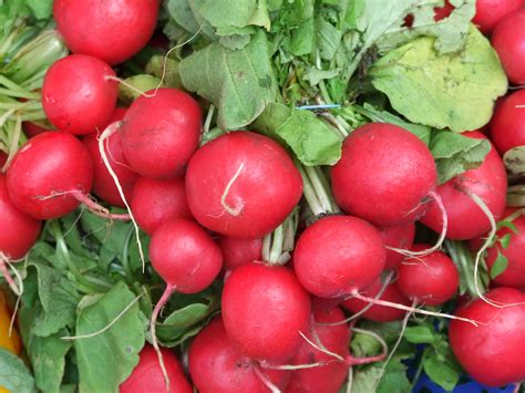 what is radish radish festival colorado aromatics