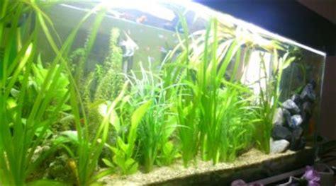 aquarium de 80 litres quels et combien de poissons mettre