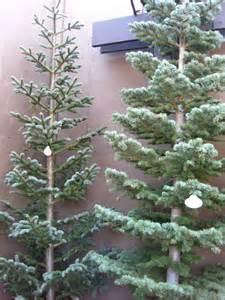 Silver Tip Christmas Tree San Francisco by Arizona Traveler Christmas Trip To The O C