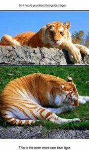 25 Best White Tiger Photographic | Animals wild, Rare ...