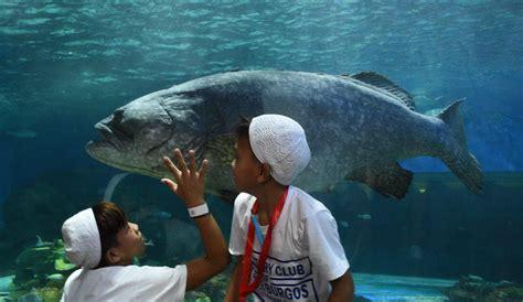 fish most aquarium grouper expensive too surface ibtimes