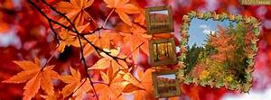 free fall covers for timeline pretty autumn