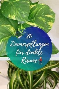 Pflanze Für Dunkle Räume : auch dunkle r ume lassen sich mit pflanzen begr nen wir ~ A.2002-acura-tl-radio.info Haus und Dekorationen