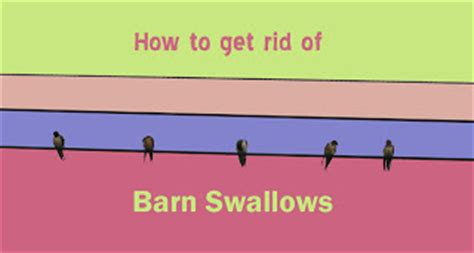 how to get rid of barn swallows rock paper lizard blogiversary post how to get rid of