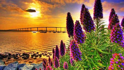 coastal flowers  sunset hd wallpaper