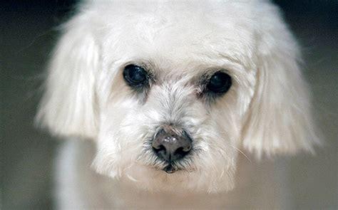 dogs   people boomers  seniors boomerinascom