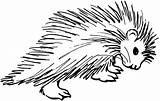 Porcupine Coloring Pages Clipart Clip Drawing Porcupines Animals Cliparts Cartoon Colouring Drawings Printable Animal Fish Library African Cartoons Prickled Crested sketch template