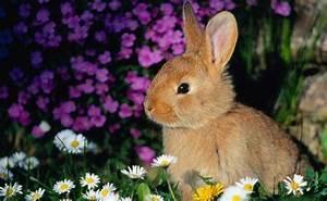 Spring Animal HD Desktop Wallpapers 7647 - HD Wallpapers Site