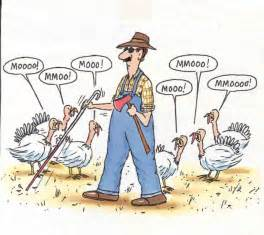 Image result for being thankful and turkeys