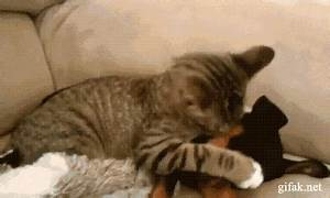 Cats And Dogs Funny Dog GIF - Find & Share on GIPHY