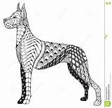 Dane Zentangle Dog Pencil Drawn Stylized Coloring Freehand Vector Head Zen Dreamstime sketch template
