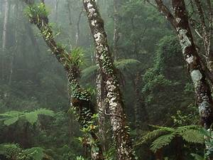 Cloud Drawing Nature Cloud Forest Mount Kinabalu National Park Borneo