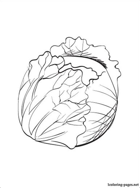 cabbage printable  coloring page coloring pages