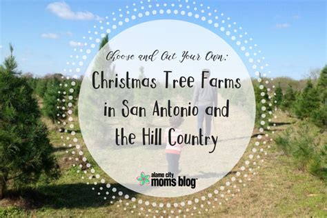 christmas tree cutting ranch near san antonio choose and cut your own tree farms in san antonio and the hill country