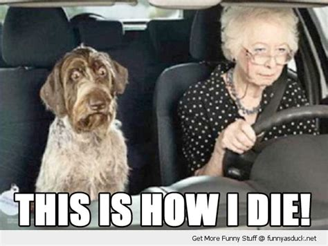 Funny Old Lady Memes - picture of old lady driving a dog in a car scared shocked dog animal old lady senior citizen