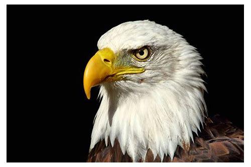 baixar grátis baixar de vídeo águia branca
