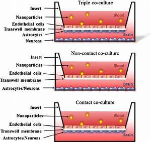 Schematic representation of in-vitro transwell blood-brain ...