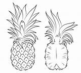 Pineapple Coloring Pages Section Print Fruits sketch template