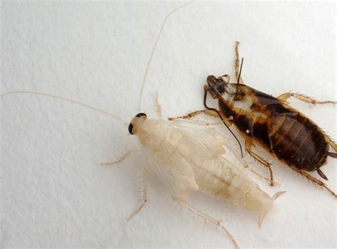 Schaben Und Kakerlaken Im Haus Loswerden by Wei 223 E Kakerlaken In Der Wohnung Gibt Es Solche
