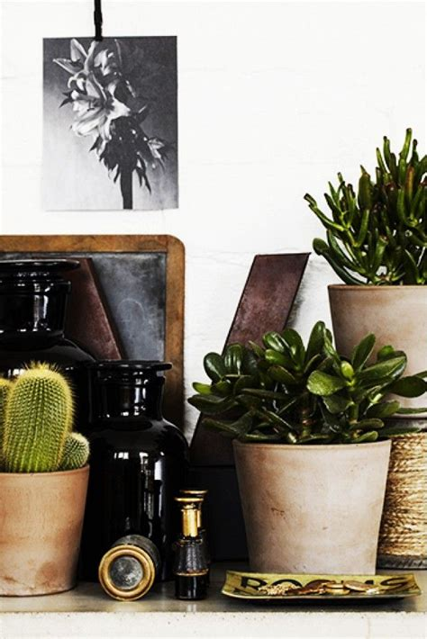 best office desk plants best desk plants for the office woodworking projects plans