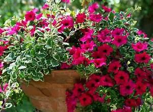 Jardiniere Fleurie Plein Soleil : plantes et feuilles pour jardini res estivales ~ Melissatoandfro.com Idées de Décoration