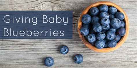 what can you make with blueberries blueberry for baby food recipes important allergy information