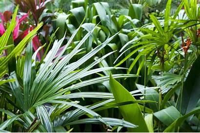 Tropical Garden Gardening Create Plant Exotic Flower