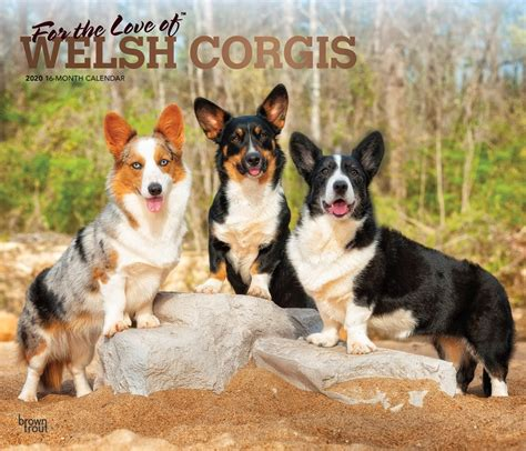 love welsh corgis monthly deluxe wall