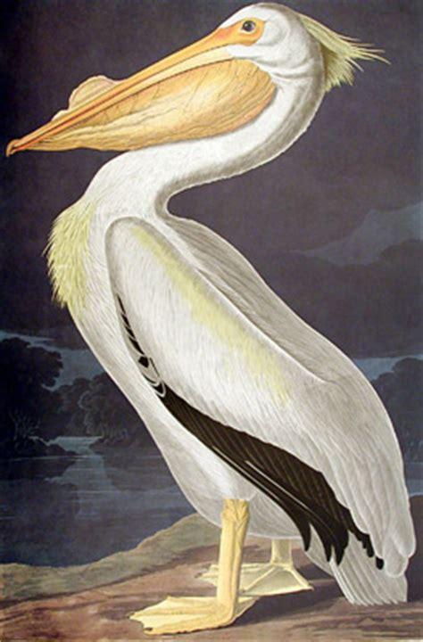 les oiseaux d am 233 rique de jean jacques audubon une exposition itin 233 rante